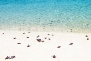 A teknősök első útja